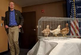rauner chickens